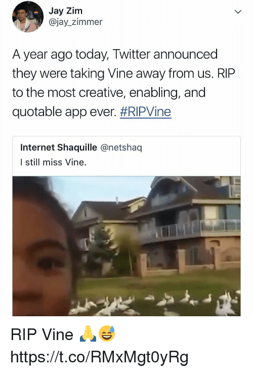 Internet, Jay, and Twitter: Jay Zim  @jay_zimmer  A year ago today, Twitter announced  they were taking Vine away from us. RIP  to the most creative, enabling, and  quotable app ever, #RIPVine  Internet Shaquille @netshaq  I still miss Vine. RIP Vine 🙏😅 https://t.co/RMxMgt0yRg