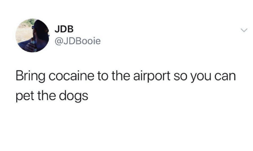 Dogs, Cocaine, and Humans of Tumblr: JDB  @JDBooie  Bring cocaine to the airport so you can  pet the dogs