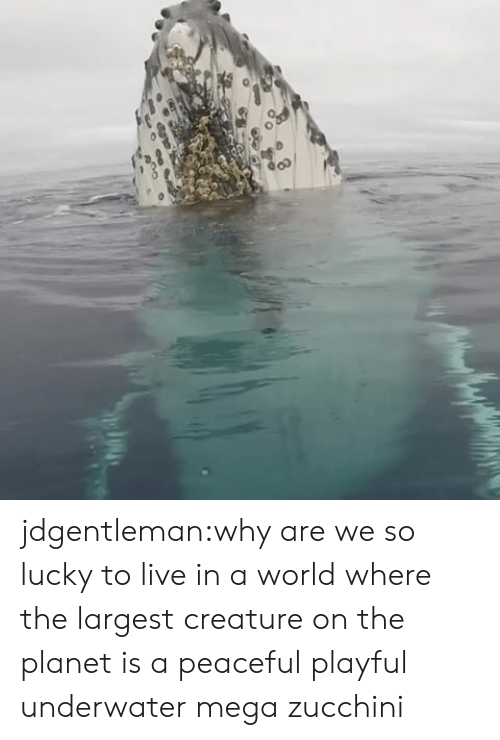 Target, Tumblr, and Blog: jdgentleman:why are we so lucky to live in a world where the largest creature on the planet is a peaceful playful underwater mega zucchini