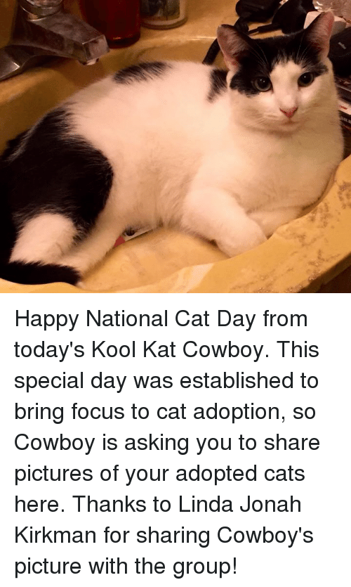 Memes, Focus, and Happy: je Happy National Cat Day from today's Kool Kat Cowboy.  This special day was established to bring focus to cat adoption, so Cowboy is asking you to share pictures of your adopted cats here. Thanks to Linda Jonah Kirkman for sharing Cowboy's picture with the group!