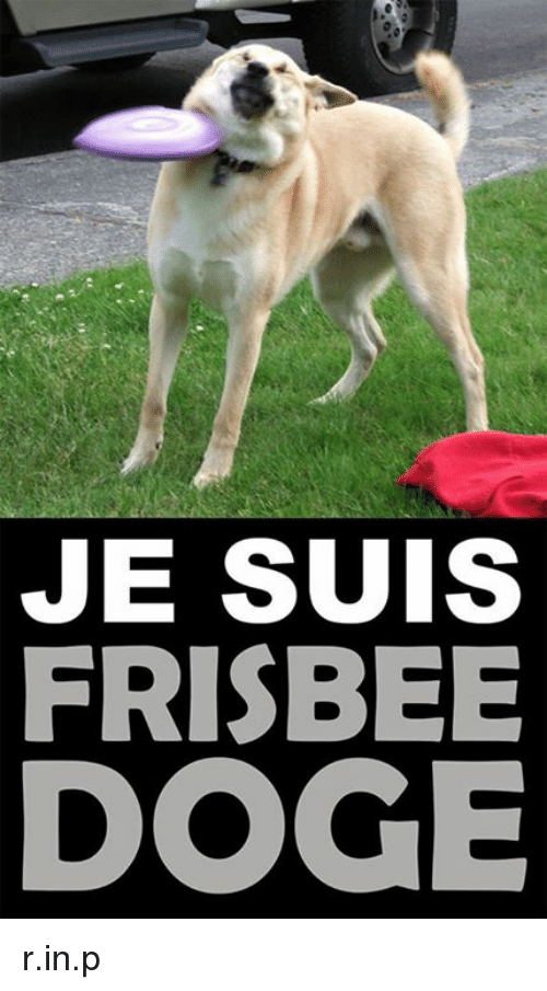 je suis frisbee doge r in p 1398987 ✅ 25 best memes about frisbee doge frisbee doge memes