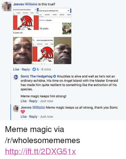 """Alive, Meme, and True: JeevesI  Is this true?  howlong do echidnas  16 years  8 years old  Like Reply 5-8 mins  Sonic The HedgehogKnuckles is alive and well as he's not an  ordinary echidna. His time on Angel Island with the Master Emerald  has made him quite resilient to something like the extinction of his  species.  Meme magic keeps him strong!  Like Reply Just now  Jeeves  Meme magic keeps us all strong, thank you Sonic  Like Reply Just now <p>Meme magic via /r/wholesomememes <a href=""""http://ift.tt/2DXG51x"""">http://ift.tt/2DXG51x</a></p>"""