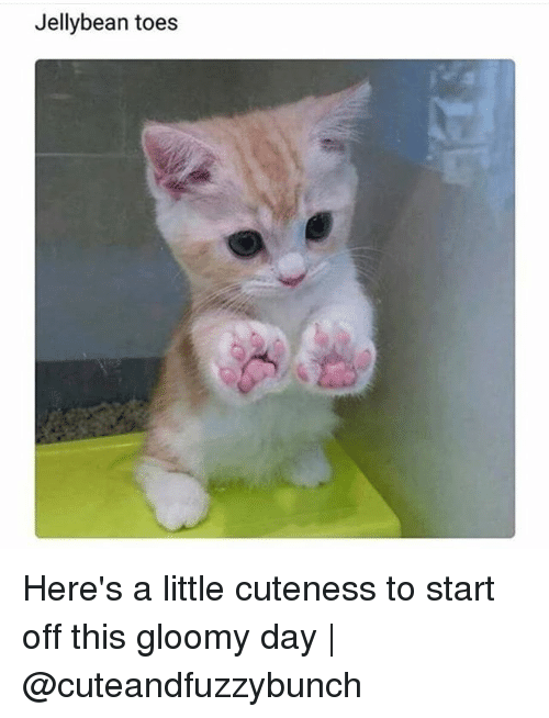 jellybean toes heres a little cuteness to start off this 31385670 jellybean toes here's a little cuteness to start off this gloomy day