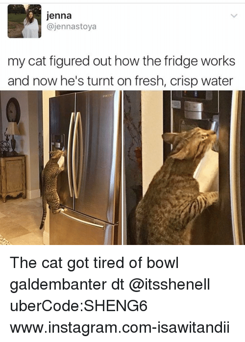 Fresh, Instagram, and Memes: Jenna  ajennastoya  my cat figured out how the fridge works  and now he's turnt on fresh, crisp water The cat got tired of bowl galdembanter dt @itsshenell uberCode:SHENG6 www.instagram.com-isawitandii
