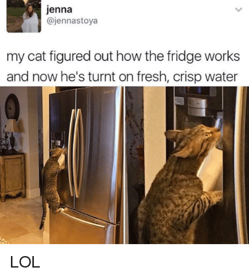 Fresh, Memes, and Water: Jenna  ajennastoya  my cat figured out how the fridge works  and now he's turnt on fresh, crisp water LOL