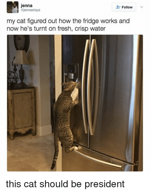 Relatable, Fridge, and Crisp: Jenna  Follow  ajennastoya  my cat figured out how the fridge works and  now he's turnt on fresh, Crisp water this cat should be president