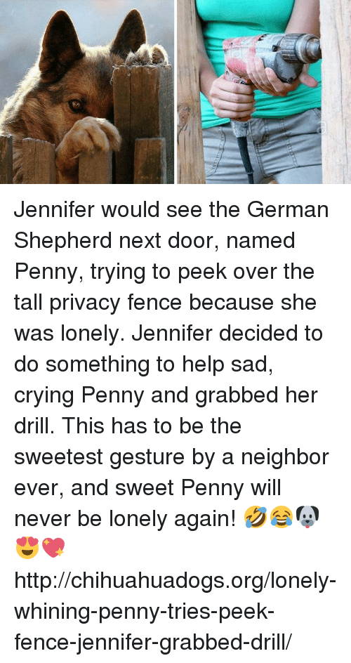 Crying, Memes, and German Shepherd: Jennifer would see the German Shepherd next door, named Penny, trying to peek over the tall privacy fence because she was lonely. Jennifer decided to do something to help sad, crying Penny and grabbed her drill. This has to be the sweetest gesture by a neighbor ever, and sweet Penny will never be lonely again! 🤣😂🐶😍💖 http://chihuahuadogs.org/lonely-whining-penny-tries-peek-fence-jennifer-grabbed-drill/