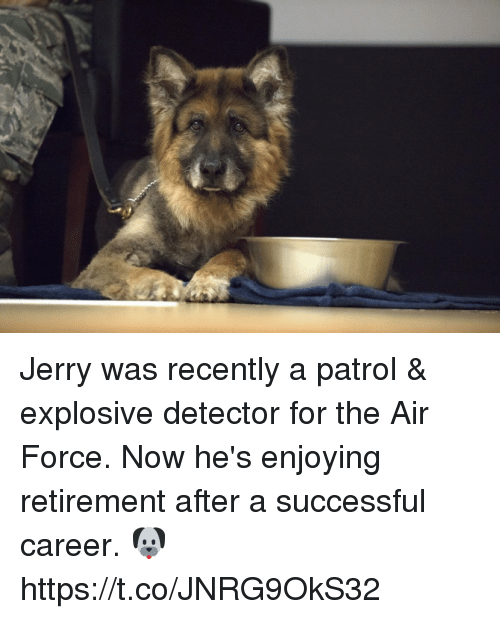 Memes, Air Force, and 🤖: Jerry was recently a patrol & explosive detector for the Air Force. Now he's enjoying retirement after a successful career. 🐶 https://t.co/JNRG9OkS32