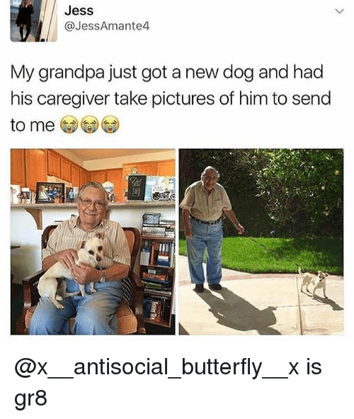 Memes, Grandpa, and Butterfly: Jess  @JessAmante4  My grandpa just got a new dog and had  his caregiver take pictures of him to send  to me @x__antisocial_butterfly__x is gr8