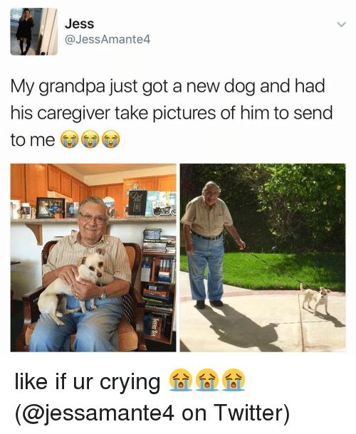Crying, Memes, and Twitter: Jess  @JessAmante4  My grandpa just got a new dog and had  his caregiver take pictures of him to send  to me like if ur crying 😭😭😭 (@jessamante4 on Twitter)
