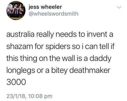 Shazam, Australia, and Spiders: jess wheeler  @wheelswordsmith  australia really needs to invent  shazam for spiders so i can tell if  this thing on the wall is a daddy  longlegs or a bitey deathmaker  3000  23/1/18, 10:08 pm