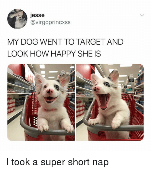 Memes, Target, and Happy: jesse  @virgoprincxss  MY DOG WENT TO TARGET AND  LOOK HOW HAPPY SHE IS I took a super short nap