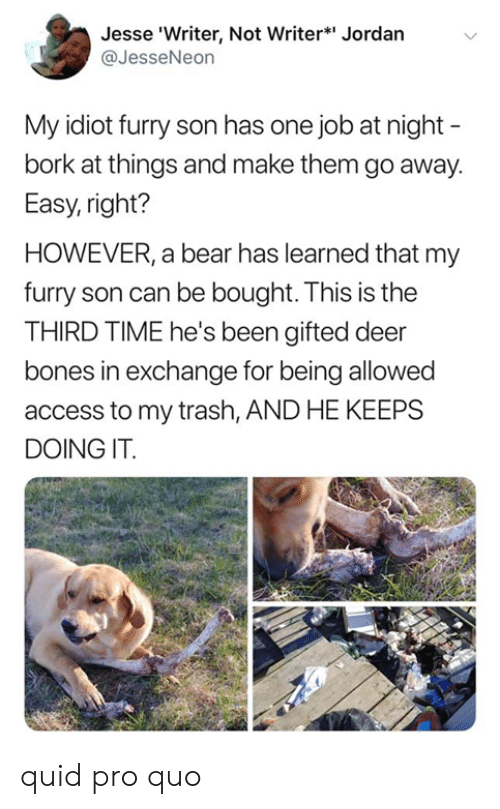 Bones, Dank, and Deer: Jesse 'Writer, Not Writer* Jordan  @JesseNeon  My idiot furry son has one job at night -  bork at things and make them go away.  Easy, right?  HOWEVER, a bear has learned that my  furry son can be bought. This is the  THIRD TIME he's been gifted deer  bones in exchange for being allowed  access to my trash, AND HE KEEPS  DOING IT quid pro quo