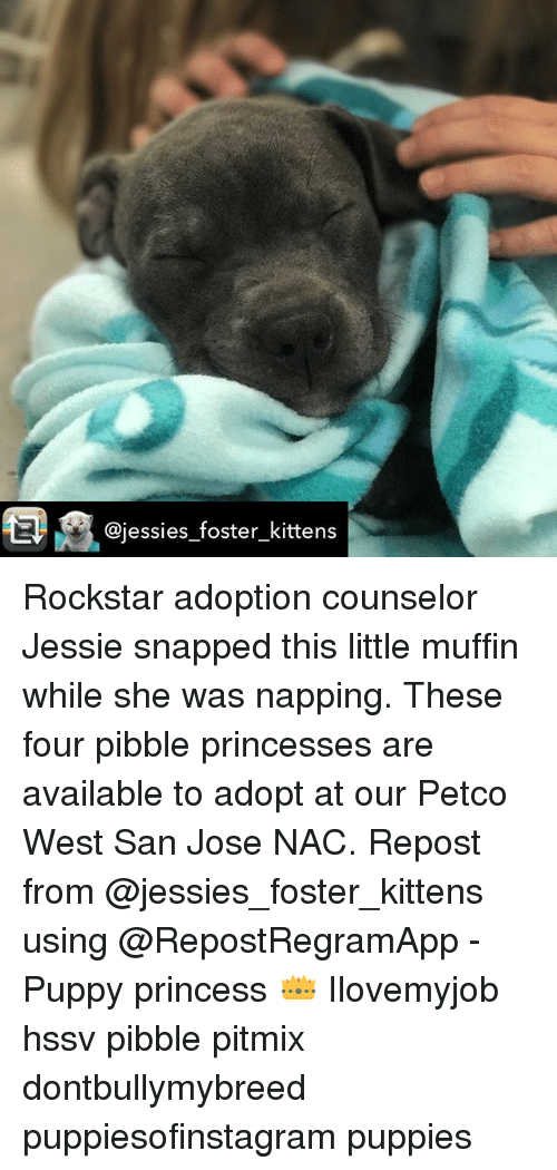 Foster Kittens Rockstar Adoption Counselor Jessie Snapped This