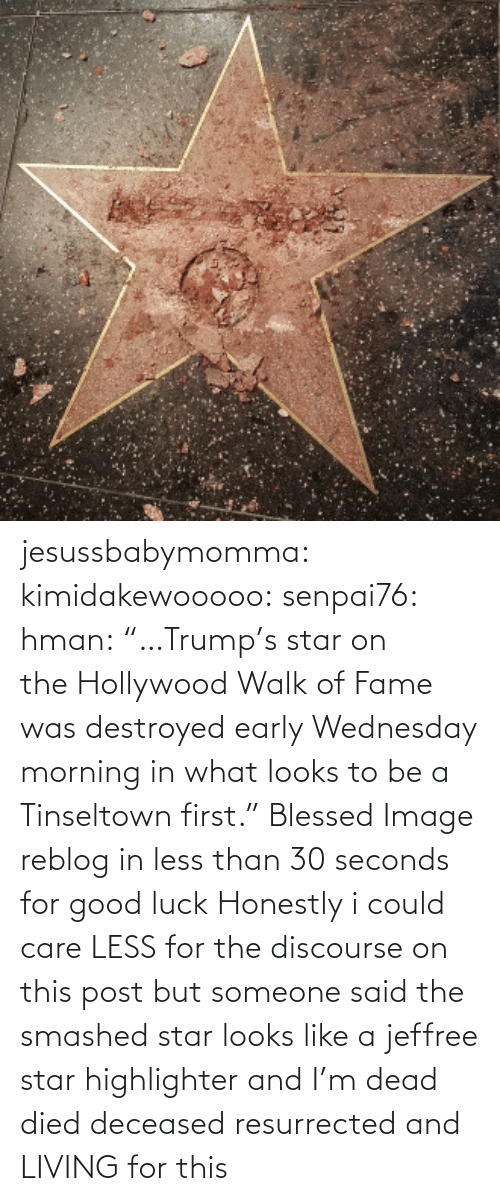 """Blessed, Donald Trump, and Tumblr: jesussbabymomma: kimidakewooooo:  senpai76:  hman:    """"…Trump's star on theHollywood Walk of Fame was destroyed early Wednesday morning in what looks to be a Tinseltown first.""""  Blessed Image  reblog in less than 30 seconds for good luck   Honestly i could care LESS for the discourse on this post but someone said the smashed star looks like a jeffree star highlighter and I'm dead died deceased resurrected and LIVING for this"""