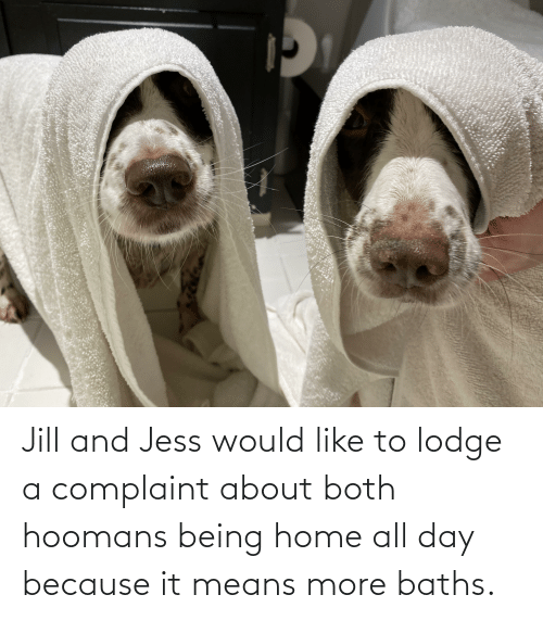 Home, Means, and Day: Jill and Jess would like to lodge a complaint about both hoomans being home all day because it means more baths.