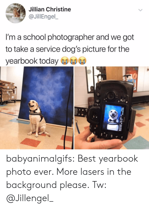 Dogs, School, and Tumblr: Jillian Christine  @JillEngel,  I'm a school photographer and we got  to take a service dog's picture for the  yearbook today babyanimalgifs: Best yearbook photo ever. More lasers in the background please. Tw: @Jillengel_