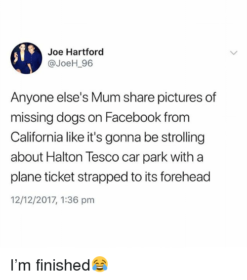 Dogs, Facebook, and California: Joe Hartford  @JoeH_96  Anyone else's Mum share pictures of  missing dogs on Facebook from  California like it's gonna be strolling  about Halton Tesco car park with a  plane ticket strapped to its forehead  12/12/2017, 1:36 pm I'm finished😂
