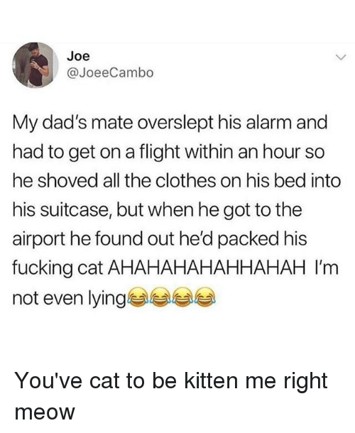 Clothes, Fucking, and Memes: Joe  JoeeCambo  My dad's mate overslept his alarm and  had to get on a flight within an hour so  he shoved all the clothes on his bed into  his suitcase, but when he got to the  airport he found out he'd packed his  fucking cat AHAHAHAHAHHAHAH I'm  not even lying You've cat to be kitten me right meow