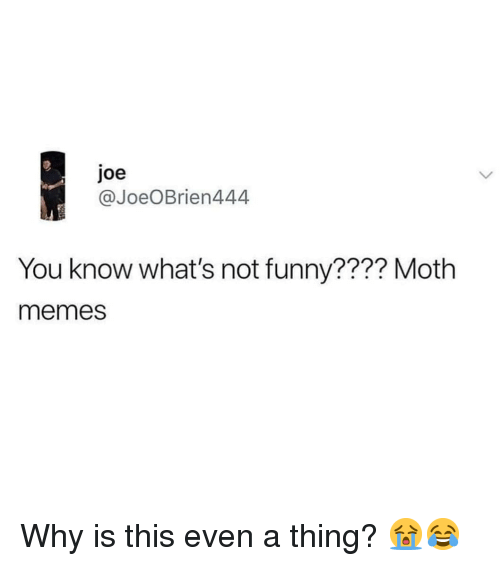 Funny, Memes, and 🤖: joe  @JoeOBrien444  You know what's not funny???? Moth  memes Why is this even a thing? 😭😂