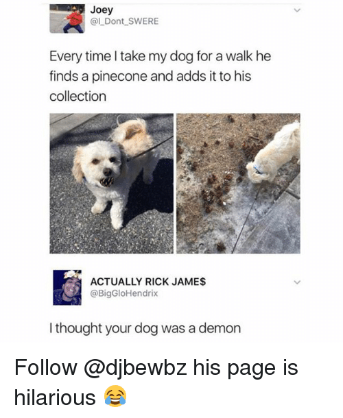 Memes, Time, and Hilarious: Joey  @l Dont SWERE  Every time I take my dog for a walk he  inds a pinecone and adds it to his  collection  ACTUALLY RICK JAMES  @BigGloHendrix  l thought your dog was a demon Follow @djbewbz his page is hilarious 😂