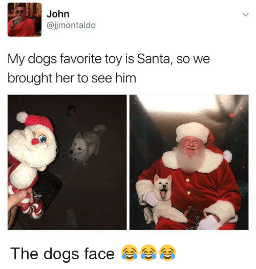 Memes, Toys, and 🤖: John  ajjmontaldo  My dogs favorite toy is Santa, so we  brought her to see him The dogs face 😂😂😂