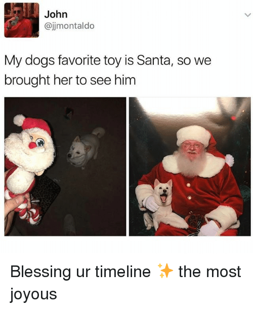 Dogs, Santa, and Girl Memes: John  @jjmontaldo  My dogs favorite toy is Santa, so we  brought her to see him Blessing ur timeline ✨ the most joyous