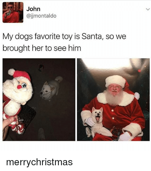 Dogs, Memes, and Santa: John  @jjmontaldo  My dogs favorite toy is Santa, so we  brought her to see him merrychristmas