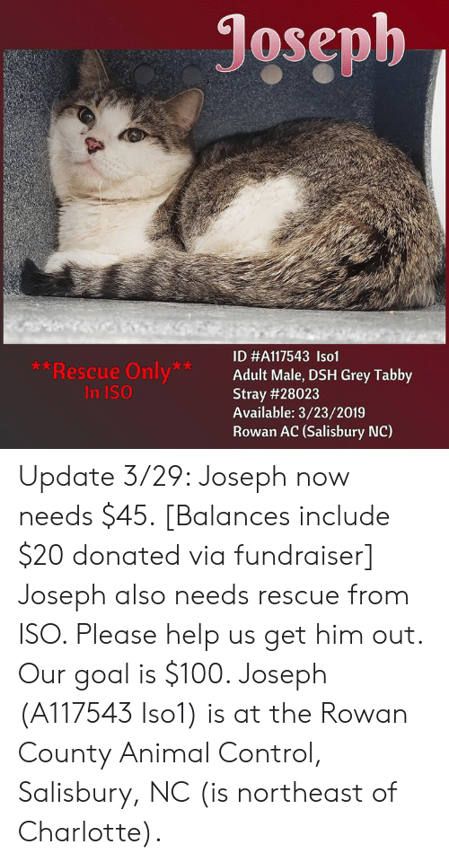 Joseph **Rescue Only* in ISO ID #A117543 Lsol Adult Male DSH Grey