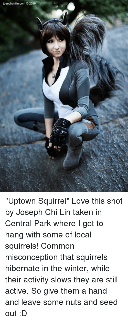 "Memes, Taken, and Common: josephchilin.com O2016 ""Uptown Squirrel"" Love this shot by Joseph Chi Lin taken in Central Park where I got to hang with some of local squirrels!  Common misconception that squirrels hibernate in the winter, while their activity slows they are still active. So give them a hand and leave some nuts and seed out :D"