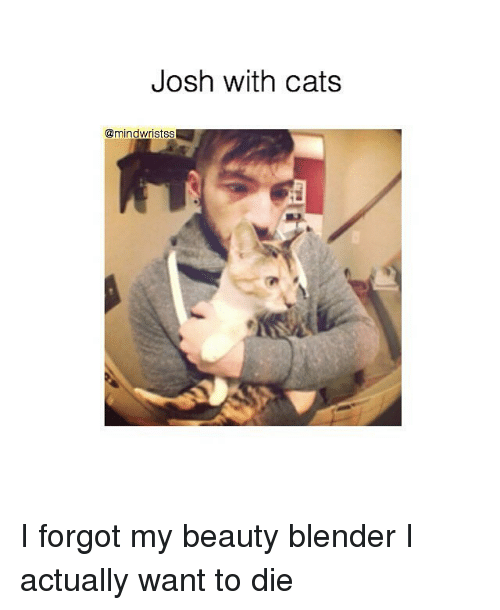 Josh With Cats I Forgot My Beauty Blender I Actually Want to Die