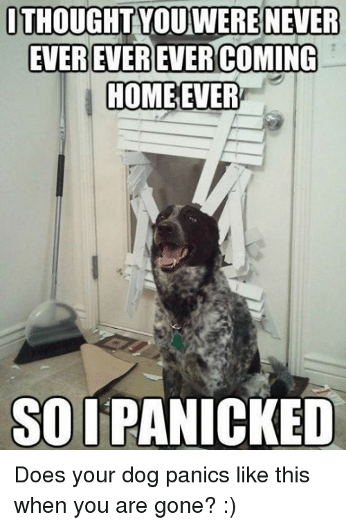 Memes, Home, And Coming Home: JTHOUGHT YOUWERENEVER EVER EVEREVER COMING  HOME EVER SOI