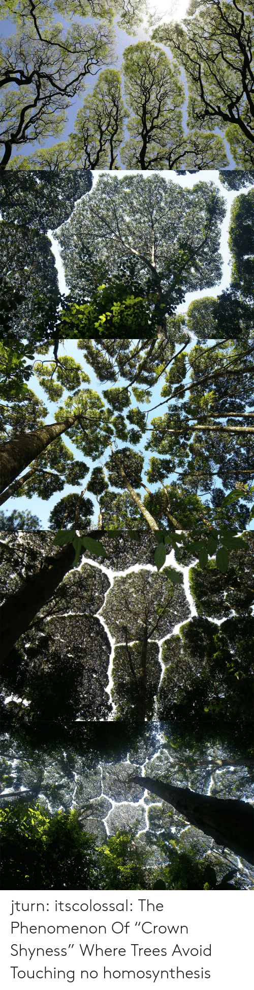 "Tumblr, Blog, and Http: jturn: itscolossal: The Phenomenon Of ""Crown Shyness"" Where Trees Avoid Touching  no homosynthesis"