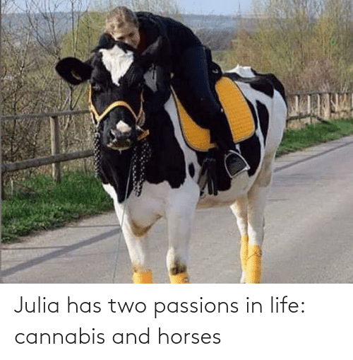 Horses, Life, and Cannabis: Julia has two passions in life: cannabis and horses
