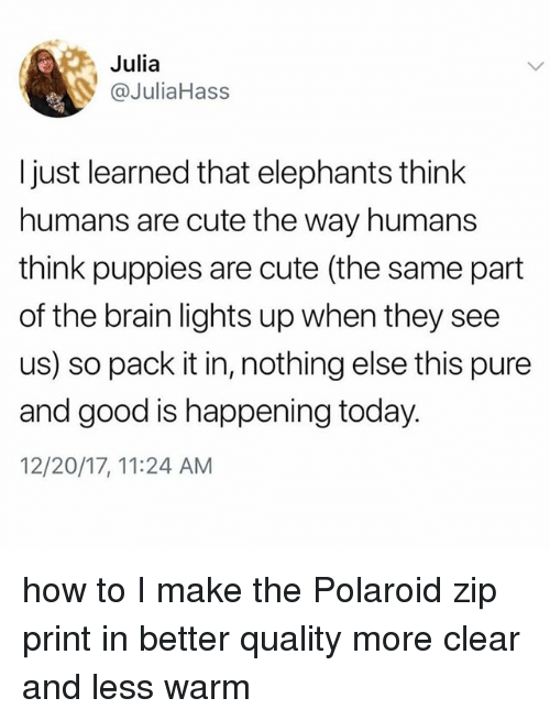 Cute, Puppies, and Brain: Julia  @JuliaHass  I just learned that elephants think  humans are cute the way humans  think puppies are cute (the same part  of the brain lights up when they see  us) so pack it in, nothing else this pure  and good is happening today.  12/20/17, 11:24 AM how to I make the Polaroid zip print in better quality more clear and less warm
