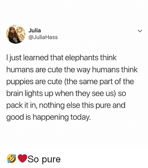Cute, Memes, and Puppies: Julia  @JuliaHass  I just learned that elephants think  humans are cute the way humans think  puppies are cute (the same part of the  brain lights up when they see us) so  pack it in, nothing else this pure and  good is happening today. 🤣❤️So pure