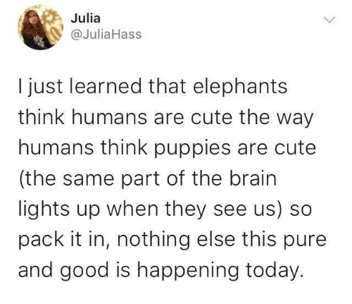 Cute, Puppies, and Brain: Julia  @JuliaHass  I just learned that elephants  think humans are cute the way  humans think puppies are cute  (the same part of the brain  lights up when they see us) so  pack it in, nothing else this pure  and good is happening today.