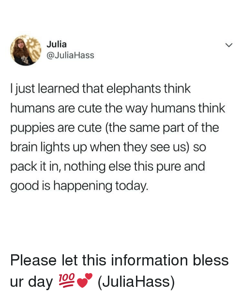 Cute, Memes, and Puppies: Julia  @JuliaHass  I just learned that elephants think  humans are cute the way humans think  puppies are cute (the same part of the  brain lights up when they see us) so  pack it in, nothing else this pure and  good is happening today. Please let this information bless ur day 💯💕 (JuliaHass)