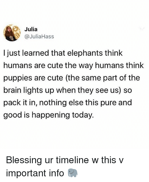 Cute, Puppies, and Brain: Julia  @JuliaHass  l just learned that elephants think  humans are cute the way humans think  puppies are cute (the same part of the  brain lights up when they see us) so  pack it in, nothing else this pure and  good is happening today Blessing ur timeline w this v important info 🐘