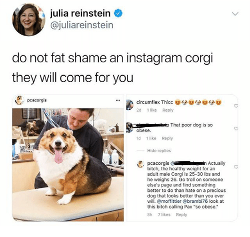 "Bitch, Corgi, and Instagram: julia reinstein  @juliareinstein  do not fat shame an instagram corgi  they will come for you  pcacorgis  circumflex Thicc u'apep@  2d 1 like Reply  obese.  d 1 like Reply  Hide replies  pcacorgis  bitch, the healthy weight for an  adult male Corgi is 25-30 lbs and  he weighs 26. Go  else's page and find something  better to do than hate on a precious  dog that looks better than you ever  will. @moffittier @brambi76 look at  this bitch calling Pax ""so obese.""  8h 7 likes Reply  Actually  troll on someone"