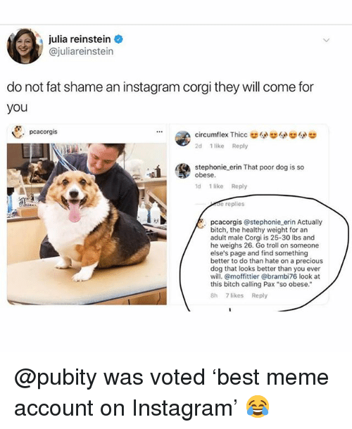 "Bitch, Corgi, and Funny: julia reinstein  @juliareinstein  do not fat shame an instagram corgi they will come for  you  pcacorgis  2d 1 like Reply  stephonie erin That poor dog is so  obese  d 1 like Reply  de replies  pcacorgis @stephonie erin Actually  bitch, the healthy weight for an  adult male Corgi is 25-30 lbs and  he weighs 26. Go troll on someone  else's page and find something  better to do than hate on a precious  dog that looks better than you ever  will. @moffittier @brambi76 look at  this bitch calling Pax ""so obese.""  8h 7 likes Reply @pubity was voted 'best meme account on Instagram' 😂"