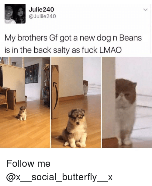 Lmao, Memes, and Being Salty: Julie240  @Juliie 240  My brothers Gf got a new dog n Beans  is in the back salty as fuck LMAO Follow me @x__social_butterfly__x