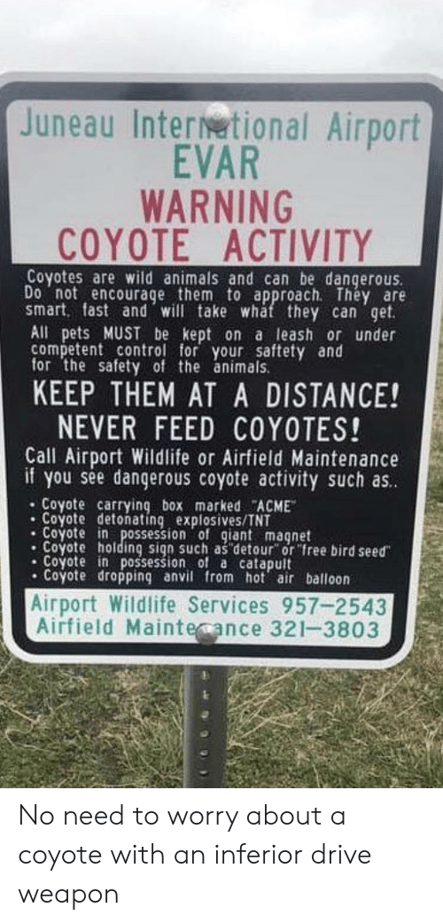 Juneau Inter Tional Airport Evar Warning Coyote Activity Coyotes Are