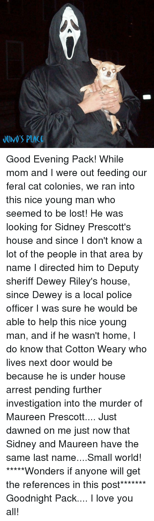 Cats, Dewey, and Love: JUNO'S PLAC Good Evening Pack!  While mom and I were out feeding our feral cat colonies, we ran into this nice young man who seemed to be lost!   He was looking for Sidney Prescott's house and since I don't know a lot of the people in that area by name I directed him to Deputy sheriff Dewey Riley's house, since Dewey is a local police officer I was sure he would be able to help this nice young man, and if he wasn't home, I do know that Cotton Weary who lives next door would be because he is under house arrest pending further investigation into the murder of Maureen Prescott....   Just dawned on me just now that Sidney and Maureen have the same last name....Small world!   *****Wonders if anyone will get the references in this post*******  Goodnight Pack.... I love you all!