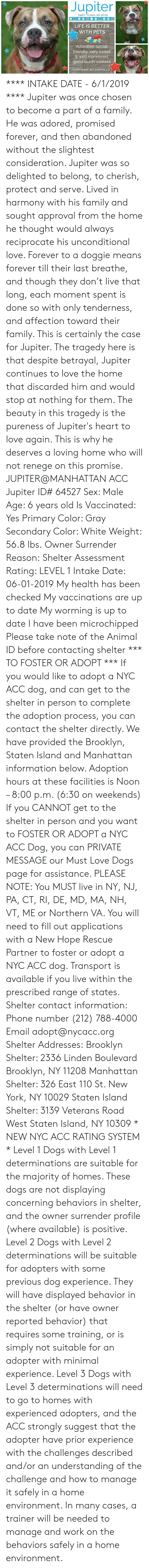 Dogs, Family, and Life: Jupiter  64527 6 years old, 56 lbs  LIFE IS BETTER  WITH PETS  Adorable, social,  friendly, very sweet  & well mannered  good leash walkers  amanhattan acc waiting 4 u! **** INTAKE DATE - 6/1/2019 ****  Jupiter was once chosen to become a part of a family. He was adored, promised forever, and then abandoned without the slightest consideration. Jupiter was so delighted to belong, to cherish, protect and serve. Lived in harmony with his family and sought approval from the home he thought would always reciprocate his unconditional love. Forever to a doggie means forever till their last breathe, and though they don't live that long, each moment spent is done so with only tenderness, and affection toward their family. This is certainly the case for Jupiter. The tragedy here is that despite betrayal, Jupiter continues to love the home that discarded him and would stop at nothing for them. The beauty in this tragedy is the pureness of Jupiter's heart to love again. This is why he deserves a loving home who will not renege on this promise.  JUPITER@MANHATTAN ACC Jupiter ID# 64527  Sex: Male Age: 6 years old Is Vaccinated: Yes Primary Color: Gray Secondary Color: White Weight: 56.8 lbs. Owner Surrender Reason: Shelter Assessment Rating: LEVEL 1 Intake Date: 06-01-2019  My health has been checked My vaccinations are up to date My worming is up to date I have been microchipped Please take note of the Animal ID before contacting shelter    *** TO FOSTER OR ADOPT ***   If you would like to adopt a NYC ACC dog, and can get to the shelter in person to complete the adoption process, you can contact the shelter directly. We have provided the Brooklyn, Staten Island and Manhattan information below. Adoption hours at these facilities is Noon – 8:00 p.m. (6:30 on weekends)  If you CANNOT get to the shelter in person and you want to FOSTER OR ADOPT a NYC ACC Dog, you can PRIVATE MESSAGE our Must Love Dogs page for assistance. PLEASE NOTE: You MUST live in NY, NJ,