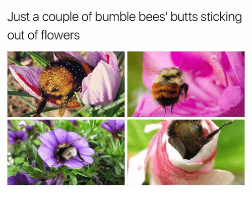 just-a-couple-of-bumble-bees-butts-stick