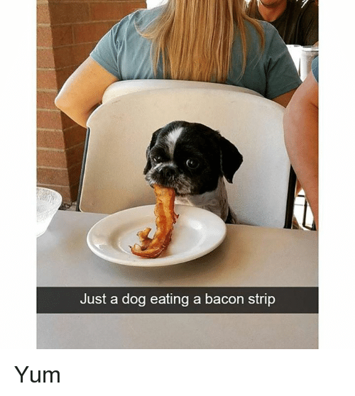 Memes, Bacon, and 🤖: Just a dog eating a bacon strip Yum