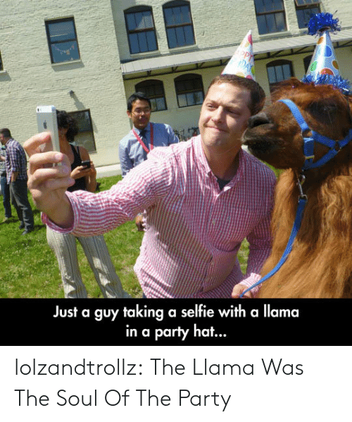 Party, Selfie, and Tumblr: Just a guy taking a selfie with a llama  in a party ha... lolzandtrollz:  The Llama Was The Soul Of The Party