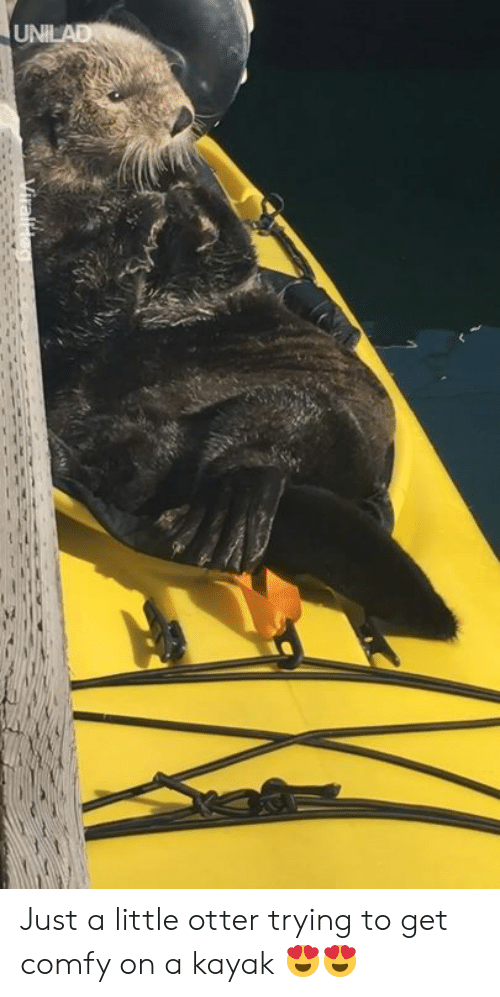 Dank, Kayak, and 🤖: Just a little otter trying to get comfy on a kayak 😍😍