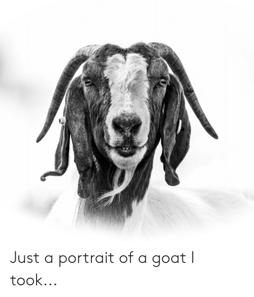 Goat, Just, and Portrait: Just a portrait of a goat I took...